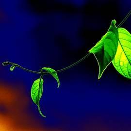 Bliss Of Art - Leaves