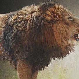 R christopher Vest - Lion Portrait