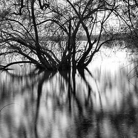 Guido Montanes Castillo - Magic reflections