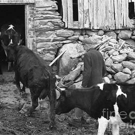 Georgia Sheron - Milking Time