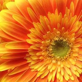 Bruce Bley - Morning Sunshine