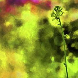 rdm-Margaux Dreamations - Mustard Blooms