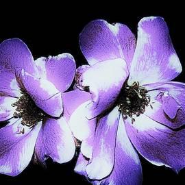 Marsha Heiken - My Twin Roses