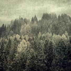 Vittorio Chiampan - Mystic woods