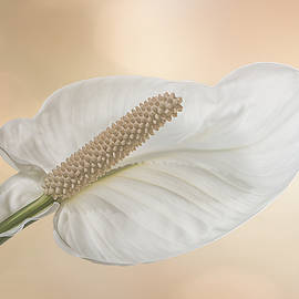 Patti Deters - Peace Lily 3.1