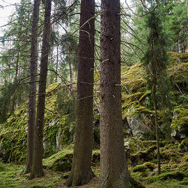 Jouko Lehto - Old forest in Kauppi Tampere
