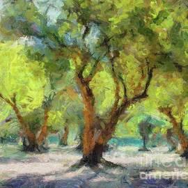 Dragica Micki Fortuna - Olive Grove