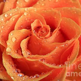 Tracy Hall - Orange Sparkle