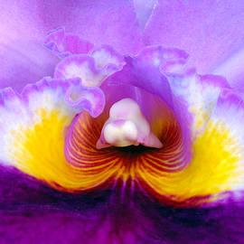Gunther Schabestiel - Orchid