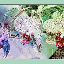 Kathleen Struckle - Orchid Trio