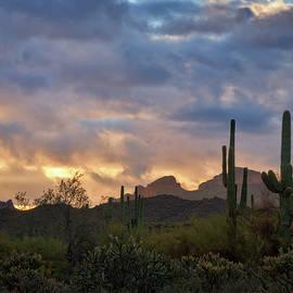 Saija Lehtonen - Pastel Desert Skies