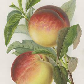 Peaches - English School