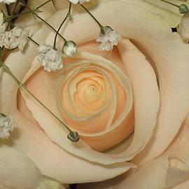 Lori Pessin Lafargue - Peachy Keen