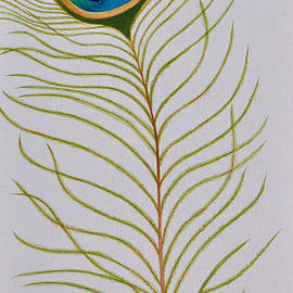 Martina Carney - Peacock Feather