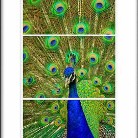 Geraldine Scull   - Peacock Framed