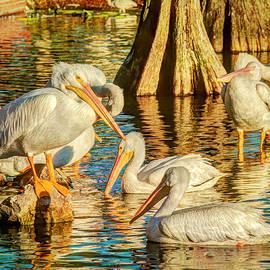 Jerri Moon Cantone - Pelicans