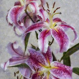 Ian Mitchell - Pink Lillies