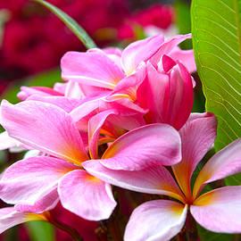 Lynn Bauer - Pink Plumeria