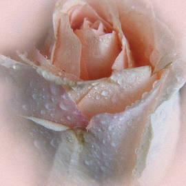 Lali Kacharava - Pink rose