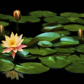 Steven Michael - Pink Water Lily