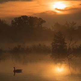 Liang Li - Pond
