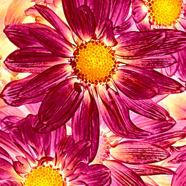 Amy Vangsgard - Pop Art Daisies 14