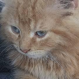 Kimberly  W - Precious kitten