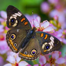 Saija  Lehtonen - Happy Little Butterfly