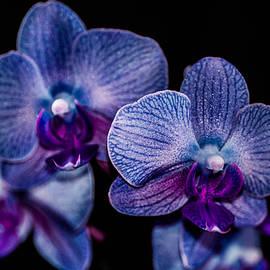 Gerald Kloss - Purple orchid