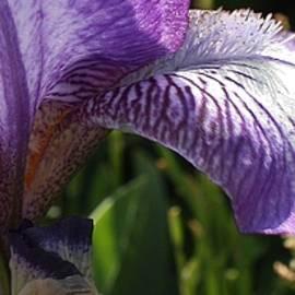 Bruce Bley - Purple Sensation