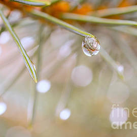 Valdis Veinbergs - Rain Drop On Pine Needles