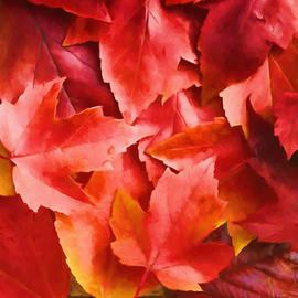 Veikko Suikkanen - Red Leaves