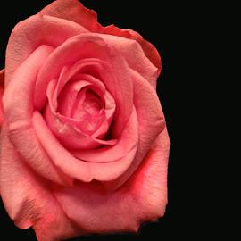 Dennis Dugan - Red Rose
