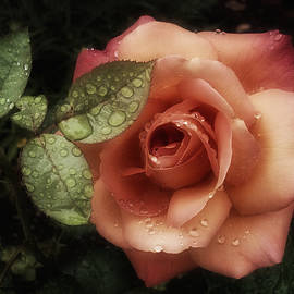 Richard Cummings - Romancing the Rose