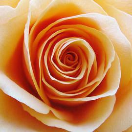 Carol Welsh - Rose