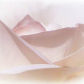 Olimpia Negura - Rose