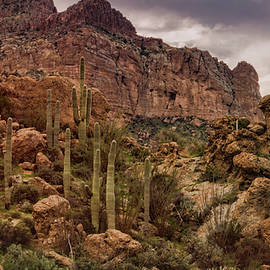 Saija Lehtonen - Saguaro Hill