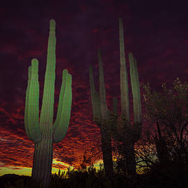 Ed  Cheremet - Saguaros At Sunset