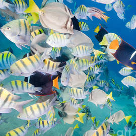 Anthony Totah - School of Tropical Fish