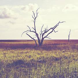 Scott Pellegrin - Sentinel of the Marsh