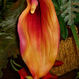 Merton Allen - Single Spath Flower