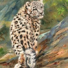 Snow Leopard Cub - David Stribbling