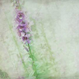 Ann Powell - Solitude
