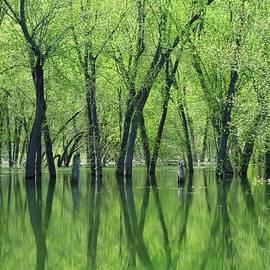 Lori Frisch - Spring Green Reflections