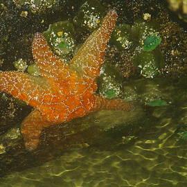 Jeff  Swan - Starfish