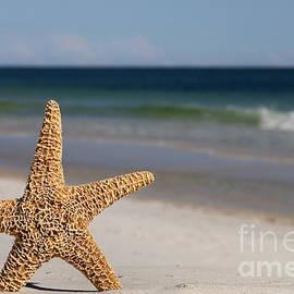 Anthony Totah - Starfish standing on the beach