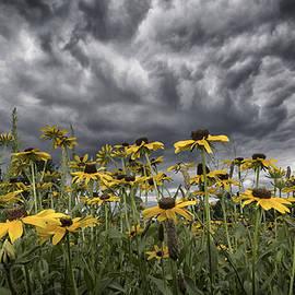 Robert Fawcett - Summer Storm