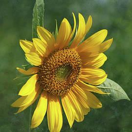 Kim Hojnacki - Sunflower in the Garden