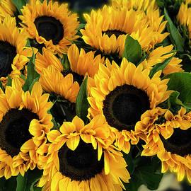 Tony Crehan - Sunflower Sensation