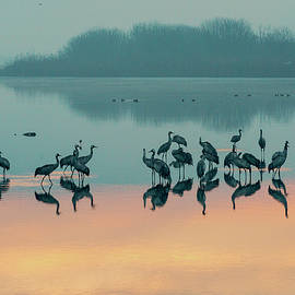 Dubi Roman - Sunrise over the Hula valley